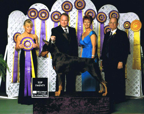 "Member Tom Nuener's GCh. Sevenly Above the Law, ""Max"", was one of the Top 20 Dobermans of 2010."