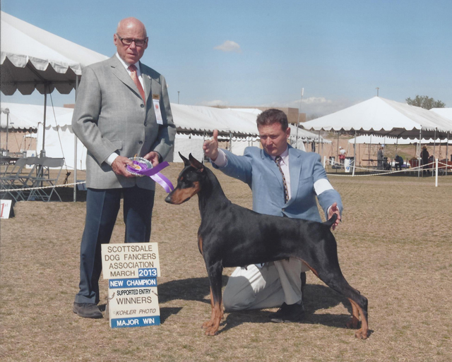 "AKC/Int'l CH Suncliff's Dancing With the Starz, CD, RA, CGC, TDI ""Zeta-Jones"" bred and owned by Louise Mogler shown here finishing her AKC championship in March 2013"