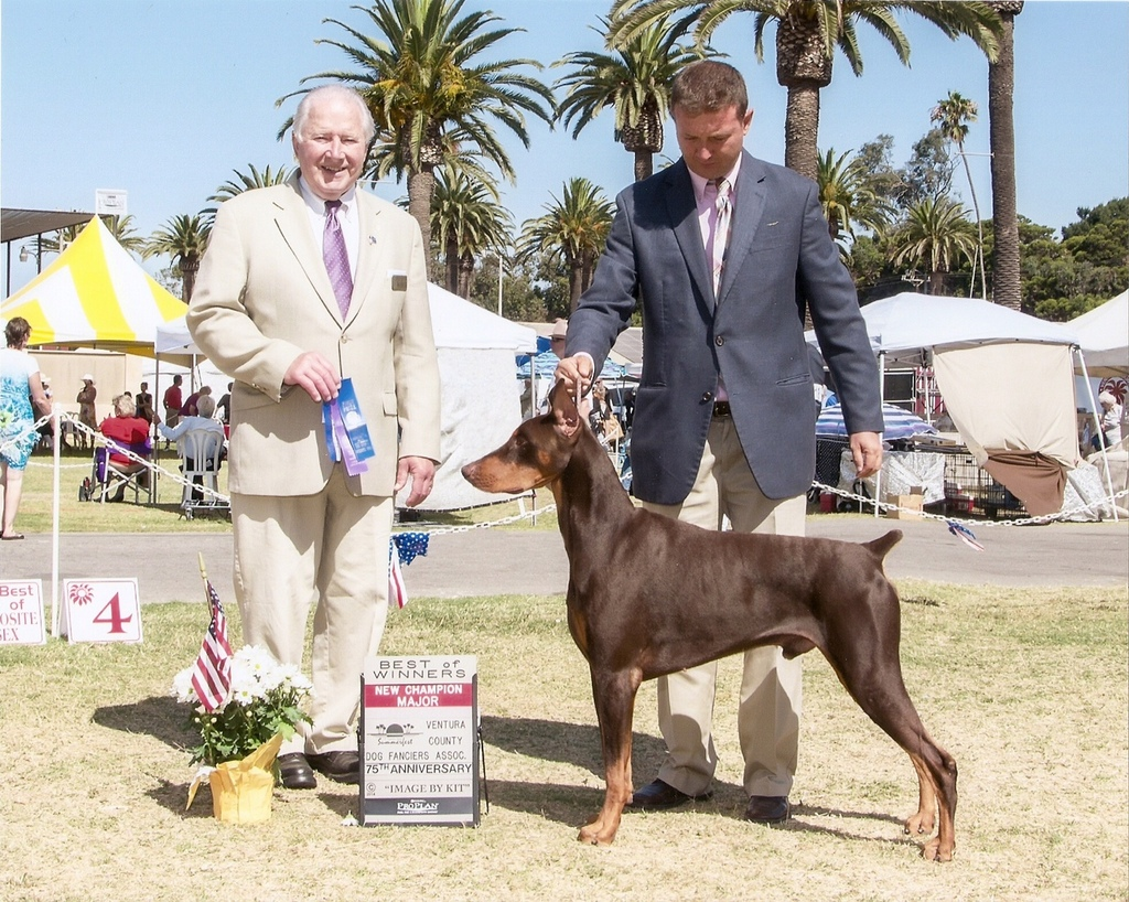 CH Alma's You and Tequila! Jase's win photo from Ventura, CA on 7/4/14. This was Jase's second 4 point major and finished him at 17 months. Jase is out of CH Cambria's the Captain x Soquel's Jewel of My Heart. Thank you Memo Cavazos for handling him to all of these wins and to Ginny Maese is his trainer, we could not have done this with out them! Jase is owned by Max Miller