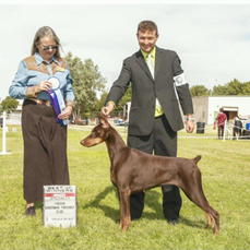 ALMA'S ROCKSTAR, Jora 22 months old Sire: CH Cambria's The Captain Handler: Memo Cavazos Owner: Max Miller