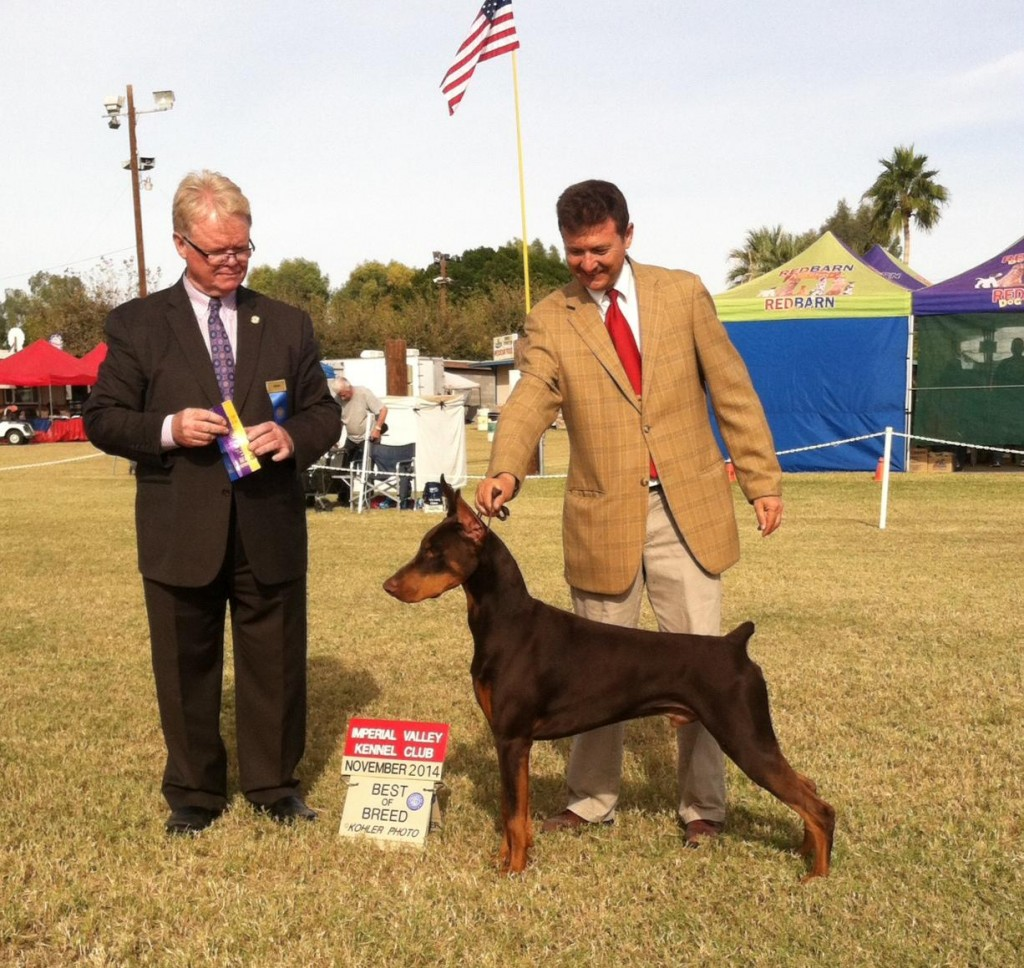 Excelsia's Farewell to Arms, Ernesto, went Best of Breed at the Imperial Valley Kennel Club. Ernesto is owned by Mimi Brown, MD and superbly shown by Memo Cavazos.