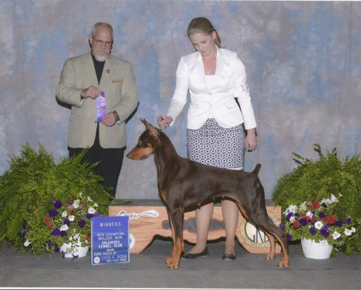 CH L'Mae Red Sky at Night Serrano Thank you judge Garry K. Newton. Serri finished at Calcasieu Kennel Club Show in Louisiana. She finished with a 4 point major and we are so proud of her. She showed beautifully with Ashlie Whitmore and Alfonso Escobedo and Jim and I are so grateful for all you did for her. ~ Judie Walters