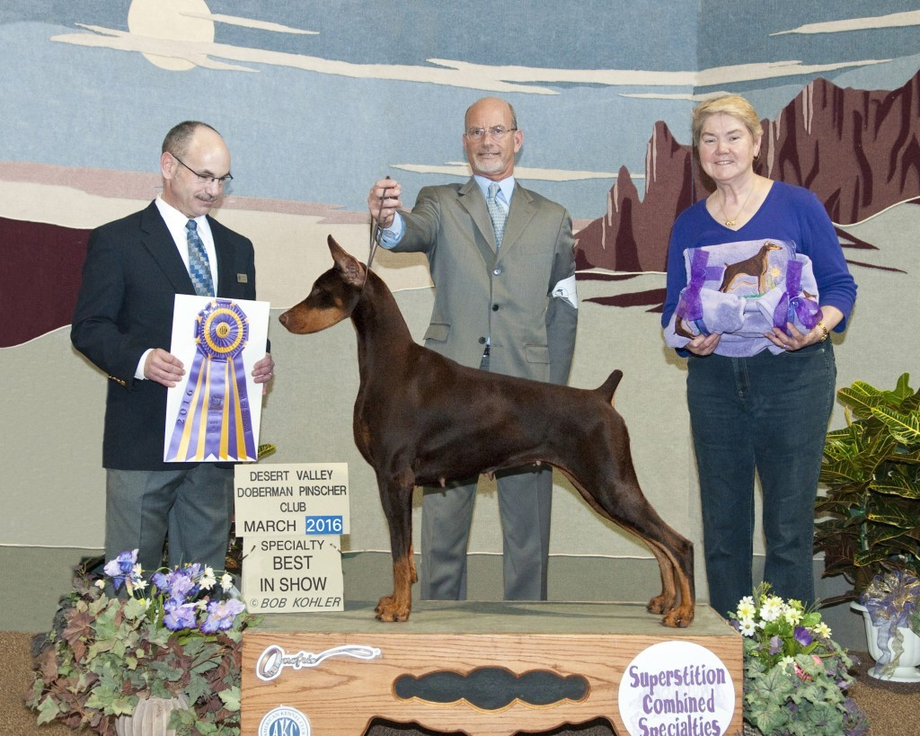 Ch Excelsia's This Side Of Paradise Handled by: Andy Linton Breeder: Naomi Barksdale & Malcolm Barksdale & Daniel Avedon Owner: Naomi Barksdale & Malcolm Barksdale & Don James Gau Sr & Lenora L Gau