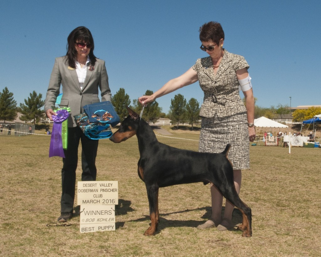 Winmar's Ole Time Rock N Roll V Synergy Breeders: Eric & Rebecca Vaughn, Lisa Burroff Handler: Lisa Burroff Owners: Molly Latham, Patrick Day & Lisa Burroff