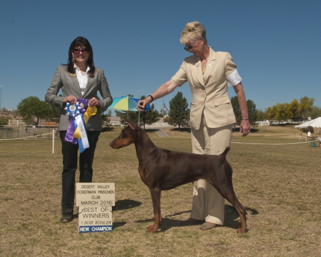 Foxhall's First Things First Breeder: Lynn Eggers Handler: Cindy Huckfeldt Owners: John & Linda Hinkle
