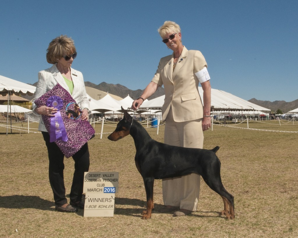 Bellacane Belva Of The Pines Breeders: Milinda & Tommy Moyer Handler: Cindy Huckfeldt Owner: Sherri Edwards