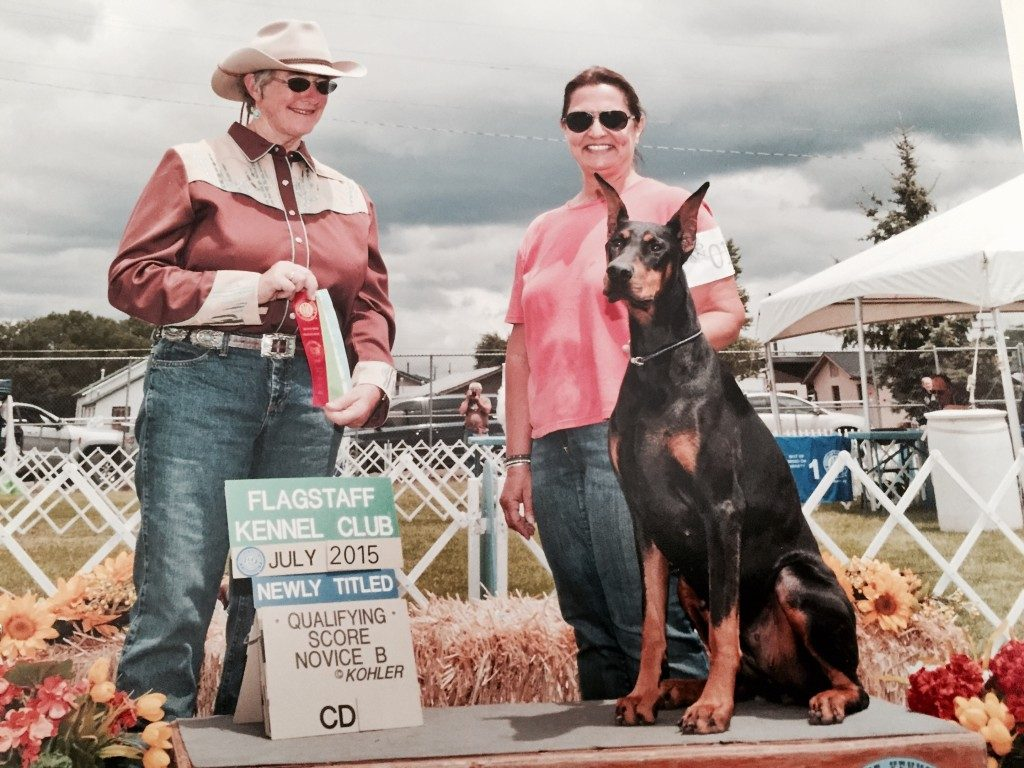LeMils Double Divinity CD BN CGC WAC owned by Michelle Lewis finished her CD in July at the shows in Williams, AZ. She is shown & trained by Barbara Nagy. Congrats Ladies!