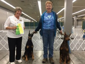Louise Mogler and her girls, Rayna James & Izzy, earned their Rally Novice titles! Congratulations Ladies!